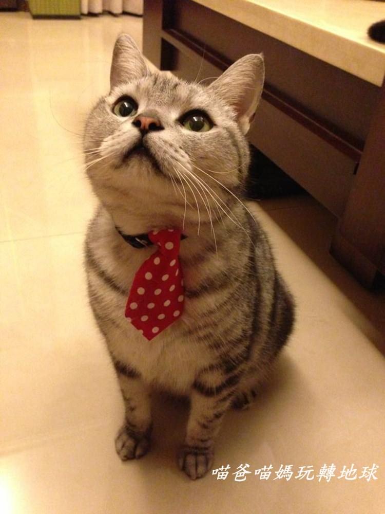 便秘貓咪治療筆記, 貓咪便秘了怎麼辦?!
