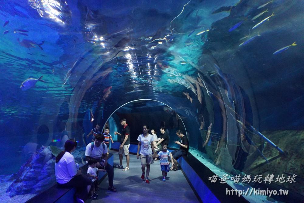 釜山推薦景點 | 釜山SEA LIFE水族館, 推薦表演, 折扣優惠門票, 交通方式, 表演活動, 參觀路線