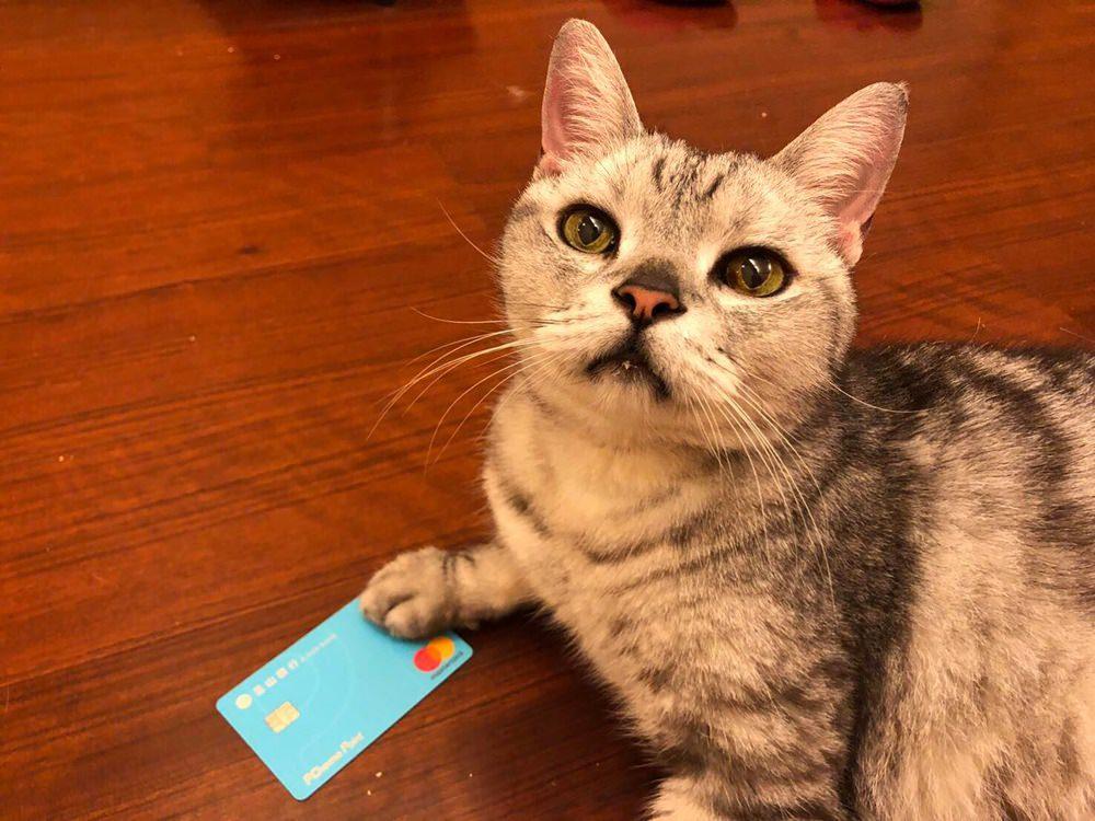 玉山Pi信用卡 | 最高回饋率4.5%、完全折抵無上限,2019年最強信用卡,玉山Pi就是第一神卡無誤!